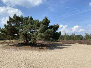 Kalmthoutse Heide parkas